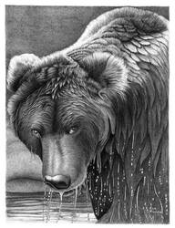 Wet Bear in Ballpoint Pen by ronmonroe