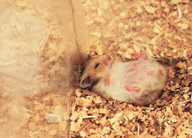 Little Brown Hamster Sleeping by lalisa-doniho