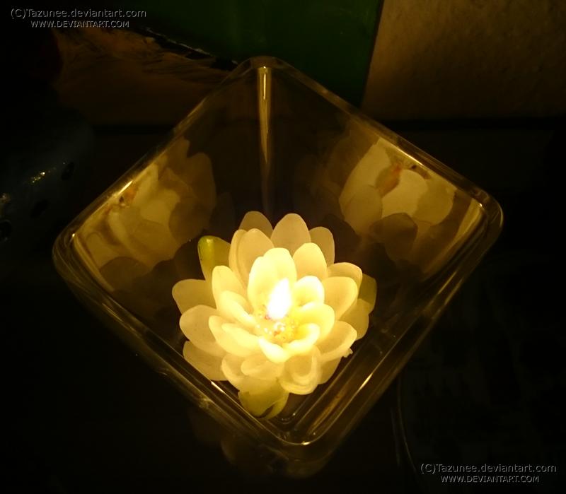 lotus light by Tazunee