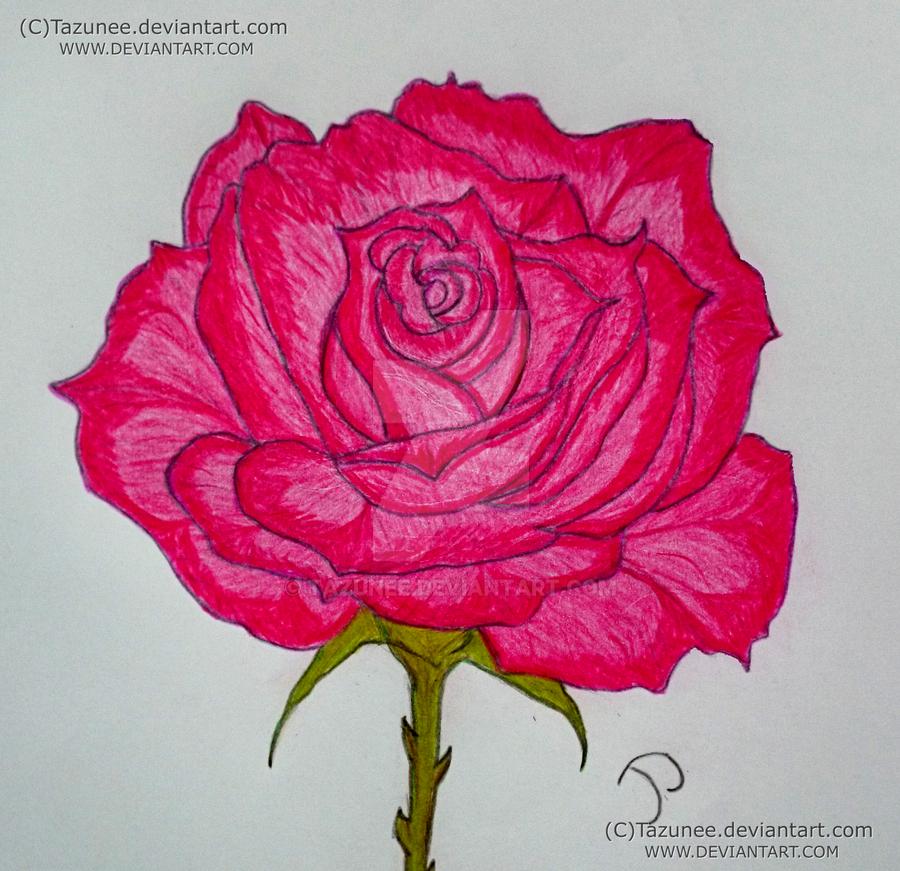 Edelrose - detail by Tazunee