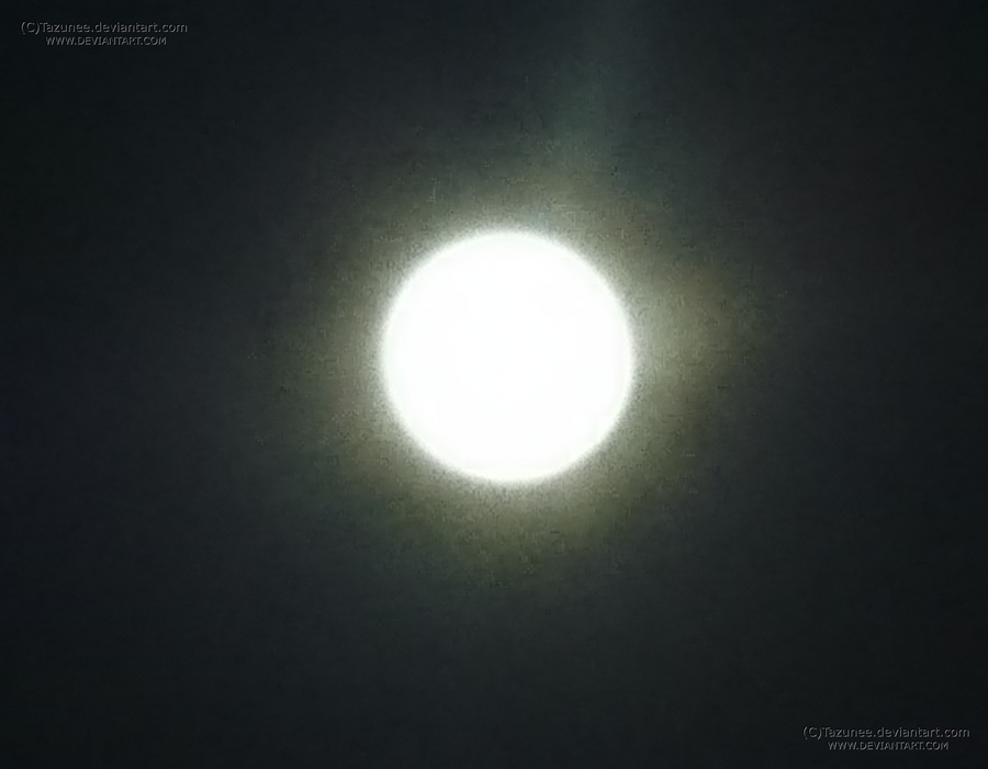 Lunaria light by Tazunee