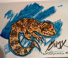 Onyx the leopard gecko