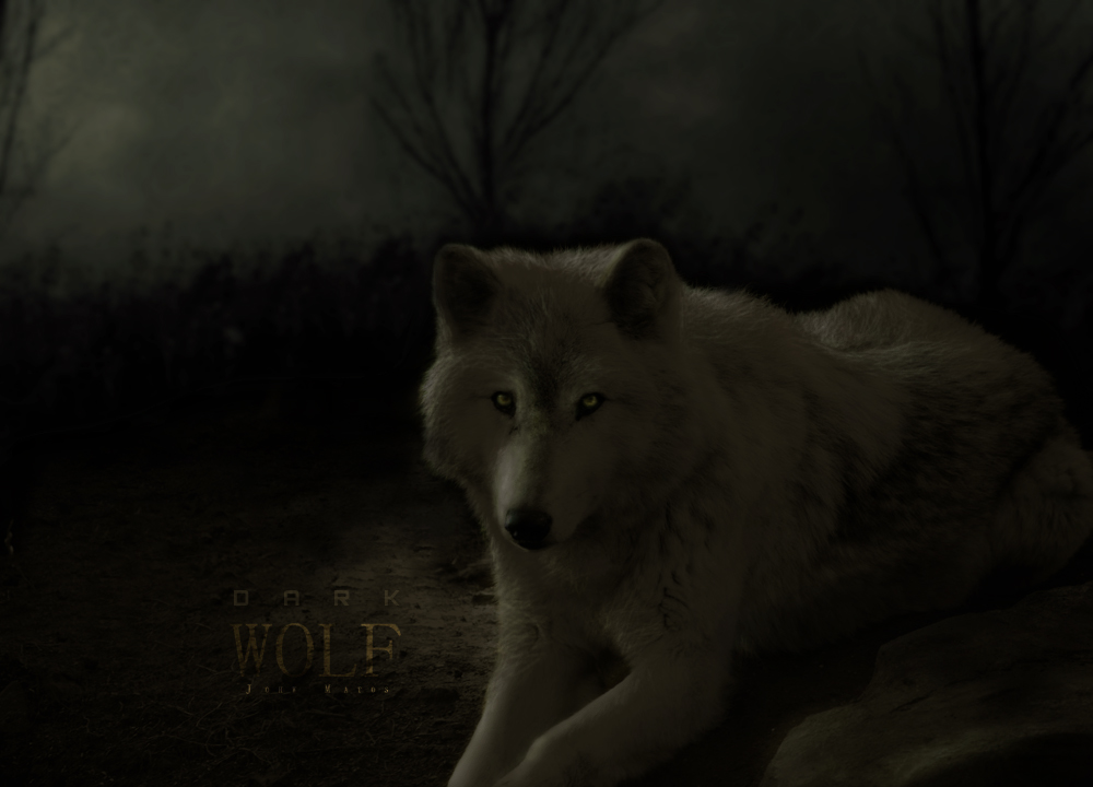 Dark wolf dark wolf by johwmatos