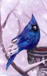 Cardbird