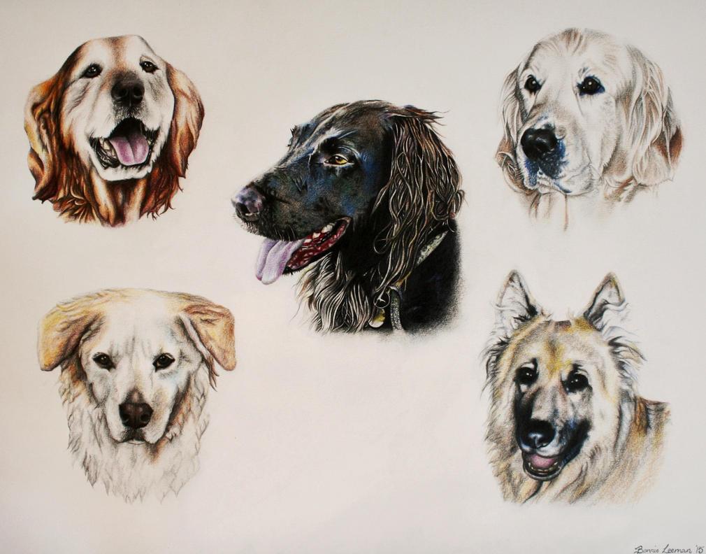 Dog Portraits by Bonniemarie