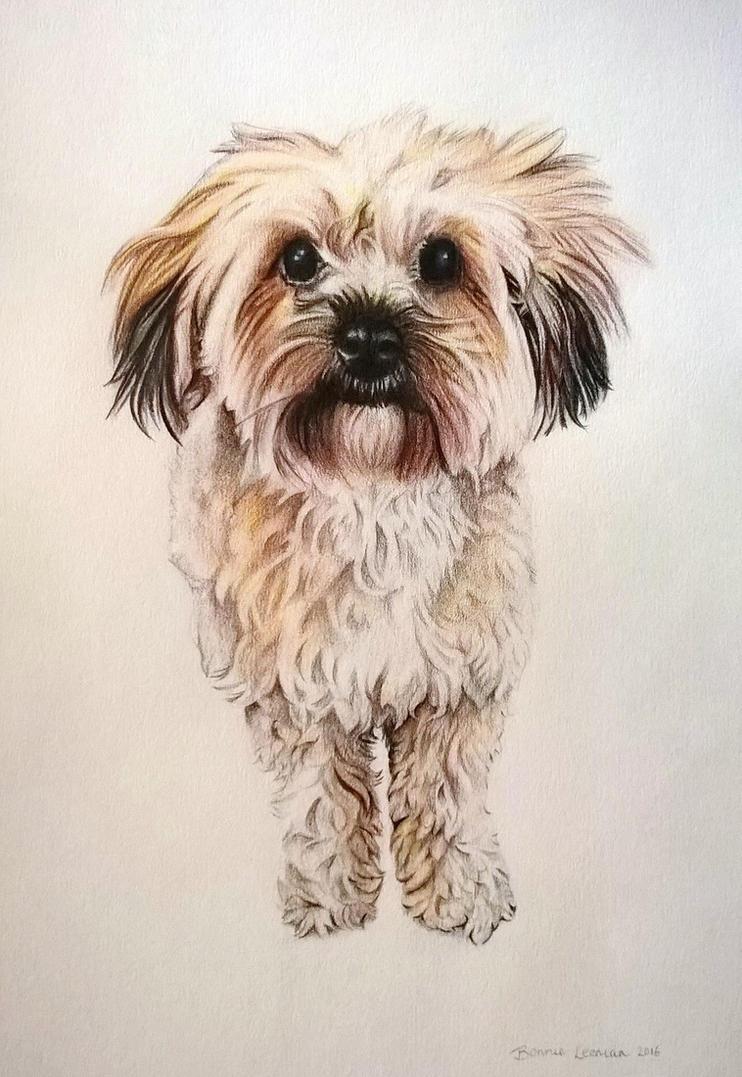 A fluffeh Dawg by Bonniemarie