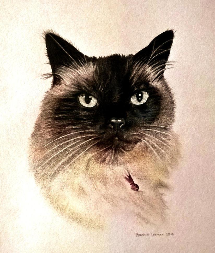 A smart Cat by Bonniemarie