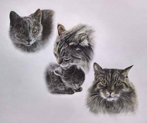 Smitten For These Kittens