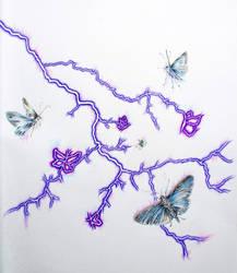 Lightning Moths