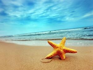 Little-Starfish's Profile Picture