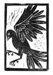 Bp-bird
