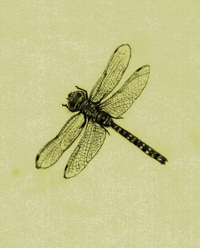 dragonfly drawing dragonfly clip art silhouette dragonfly clipart border