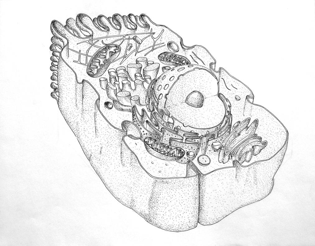 Section of an animal cell by trdartz on deviantart section of an animal cell by trdartz ccuart Gallery