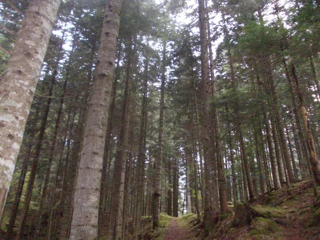 Eternal Woods of Carnia by ZarthialDragon