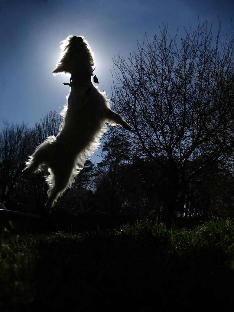 Lexie Jump by Mercy-Angel