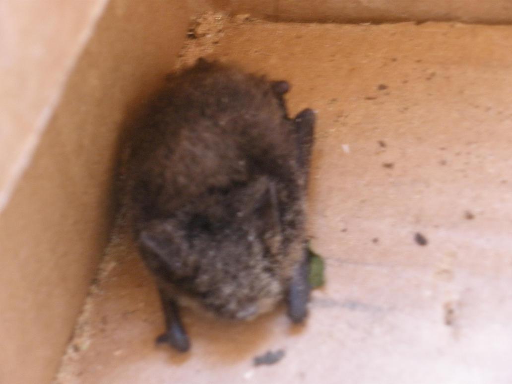 Wild Bat by Lavonya-Vegeta-Lover