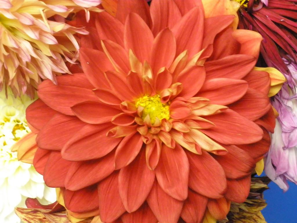 Flowers by Lavonya-Vegeta-Lover
