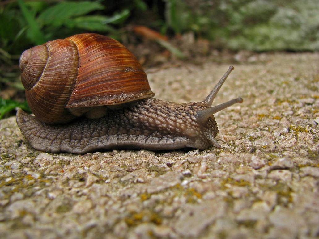 Snail explorer3 by Darknight-Stock