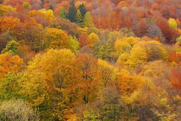 Autumn texture by BogdanEpure