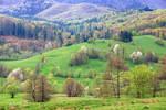Bucovina's hills by BogdanEpure