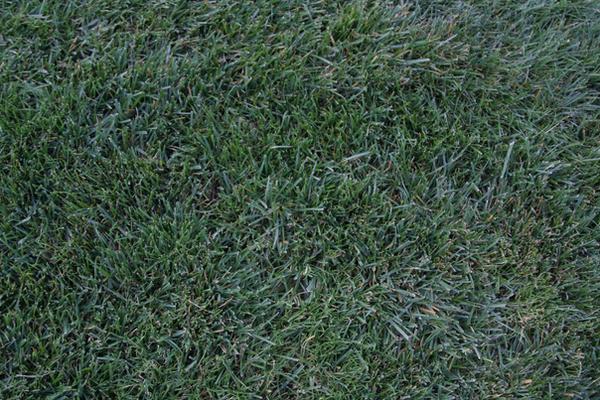 Grass 002 by putrefy