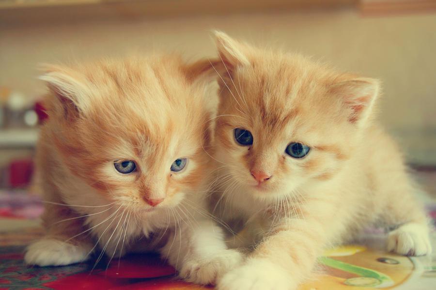 Meow by Iliketobeweird