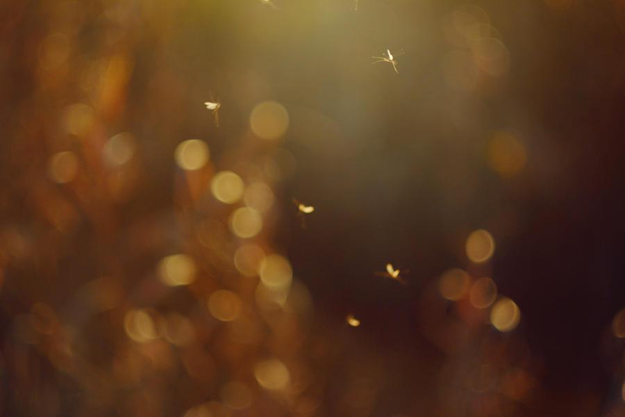 Free like a bugs by Iliketobeweird
