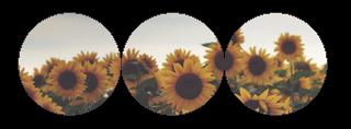 sunflower divider by hvrtful on DeviantArt