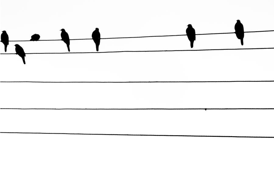 The birds talk by Arktrus