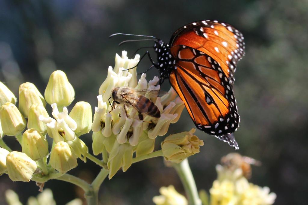 bless the pollinators by alaskass
