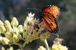 bless the pollinators