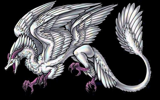 Dragon for Shane