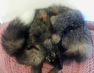 Big Male Cross Fox Pelt for Sale! *ON HOLD* by Anacita