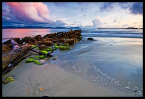 Driftwood, Stones and Algae by Jase036