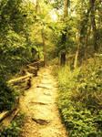 On the Trail We Blaze