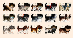 cat adoptables  {OPEN 1/15}