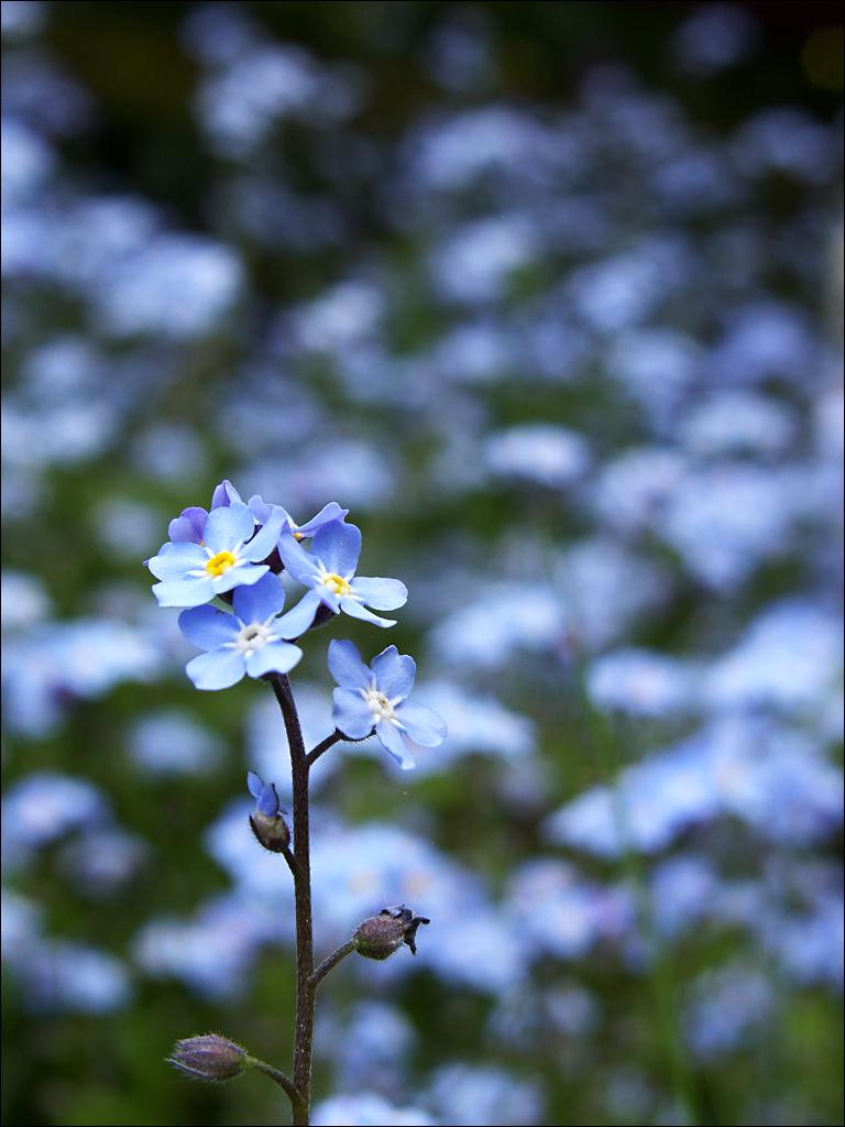 Blau01 by Halligen