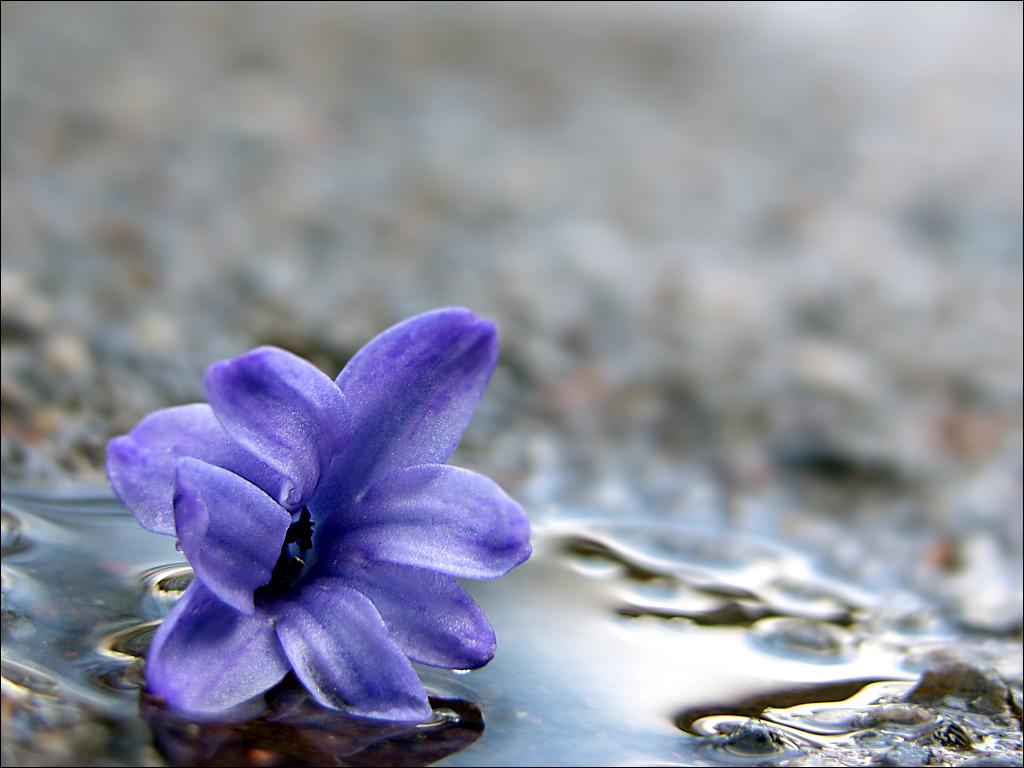 Nach dem Regen... by Halligen