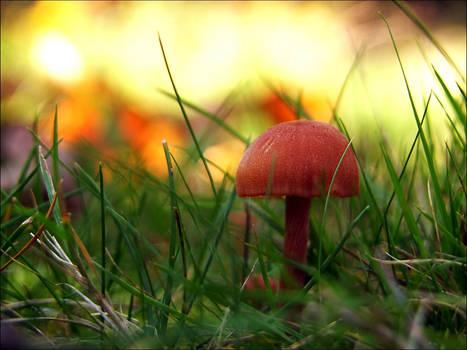 Pilz im goldenen Licht