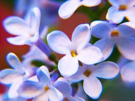 Lilac by Shinigamigirl666