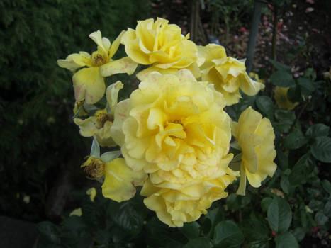 Flora, No. 1