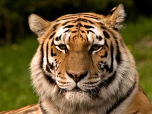 Kraven7's Profile Picture