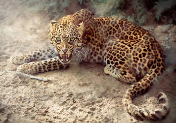 Leopard by Riham-Darwish