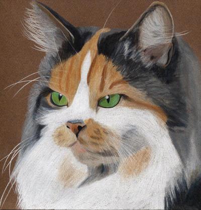 Portrait of a cat (coloured pencil)