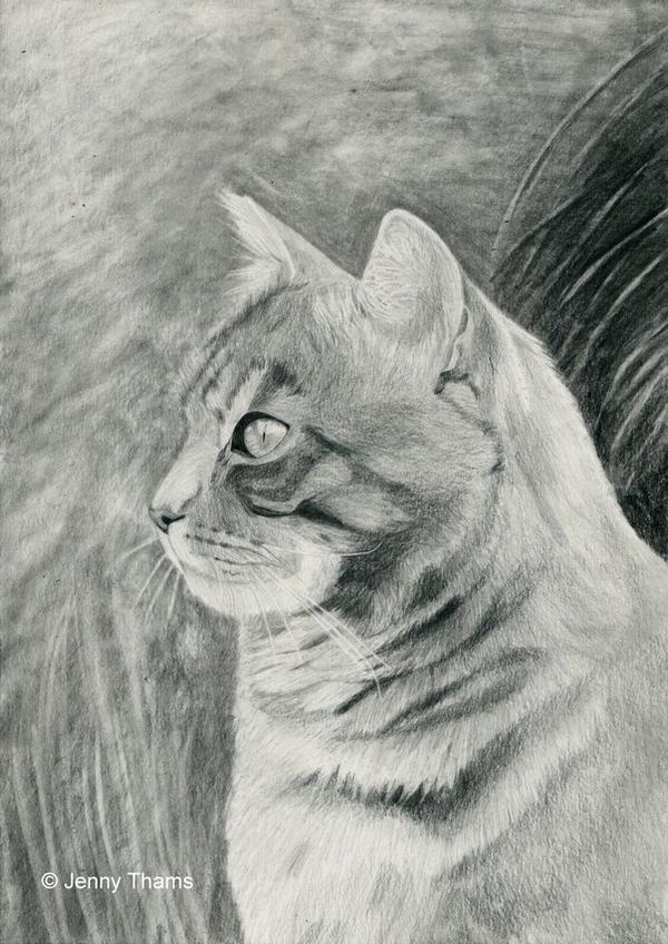 Tabby cat (pencil drawing)