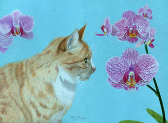 Orange tomcat with orchids (coloured pencils) by JenThams