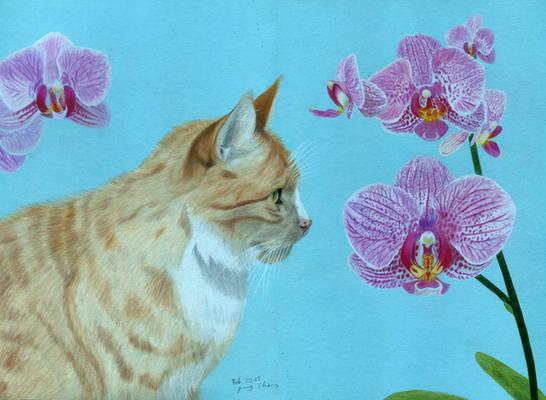 Orange tomcat with orchids (coloured pencils)