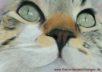 Cat Portrait (Katzenportrait, Farbstiftzeichnung)