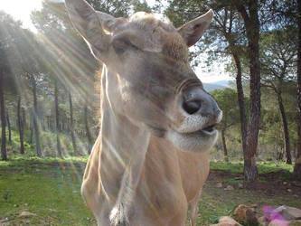 Wild Sunday: Antelope by stygyan