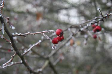 Frozen by DianaShadoweye
